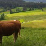 Umweltgerechte Landwirtschaft