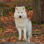 ABGESAGT – Peter und der Wolf auf Tasteninstrumenten